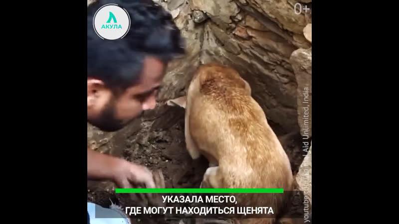 Собака помогла в спасении своего щенка | АКУЛА