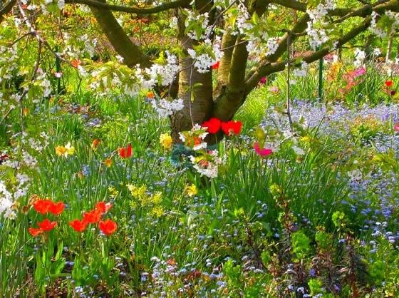 Цветы, растущие в тени деревьев