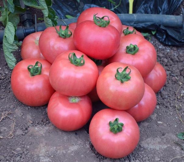 Четыре СУПЕР-подкормки для томатов!