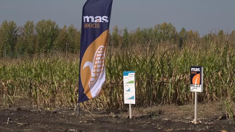 Сердобск ТВ - Выездной семинар в поле от MAS Seeds