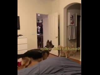 Прятки с собаками