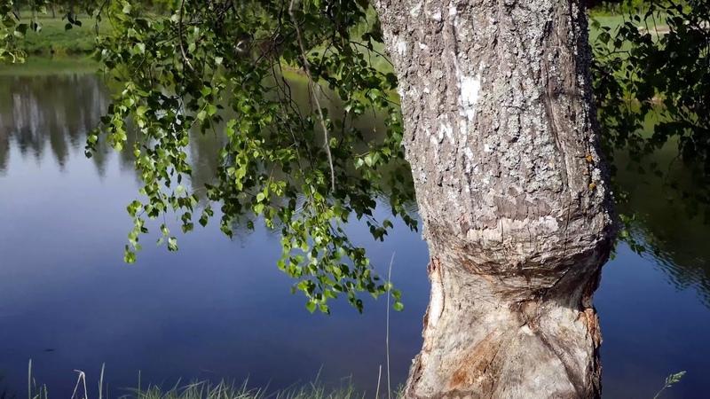 Прогулка в лес за грибами весной 2019. Красивая природа средней полосы России. Музыка для души
