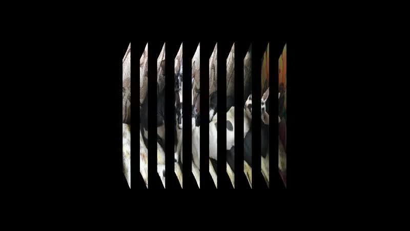 Video20191022_175730.mp4
