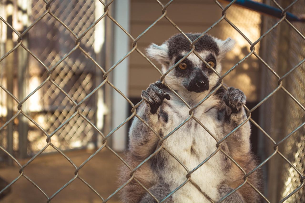 Зоопарк - единственная тюрьма, где ВСЕ заключённые невиновны.