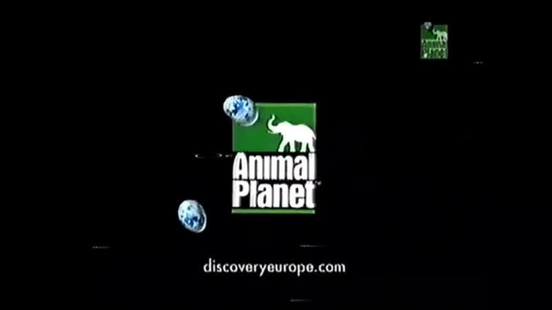 Мини-заставка канала Animal Planet 2000-2004 г. {4}