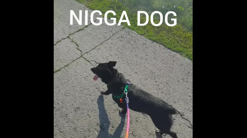 NIGGA DOG RUN под токийский жигуль ой то есть гуль