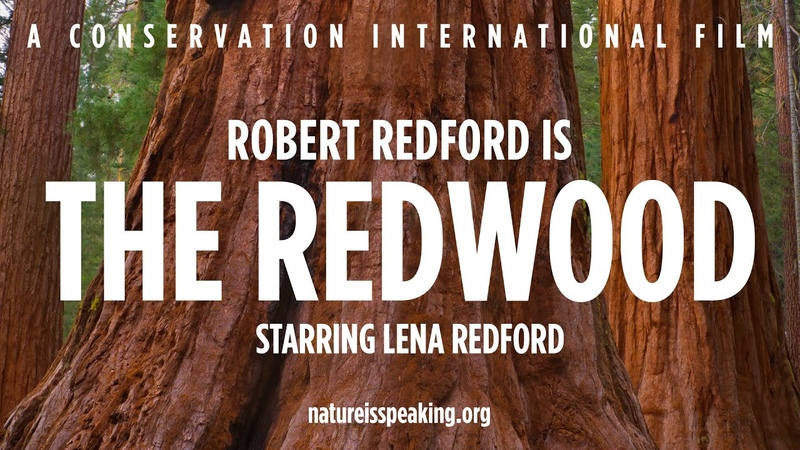 Nature Is Speaking Robert Redford is The Redwood Conservation International CI