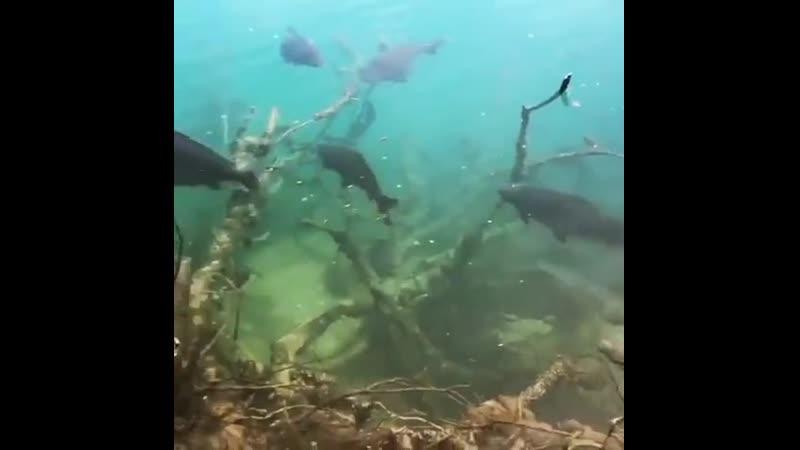 Мой рай,для рыбалки vjq hfq,lkz hs,fkrb