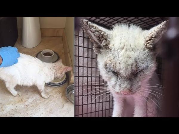 Слепой бездомный кот удивляет своих спасателей, когда показывает невероятно красивые глаза!