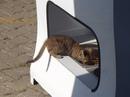 Автоматы для кормления бездомных животных