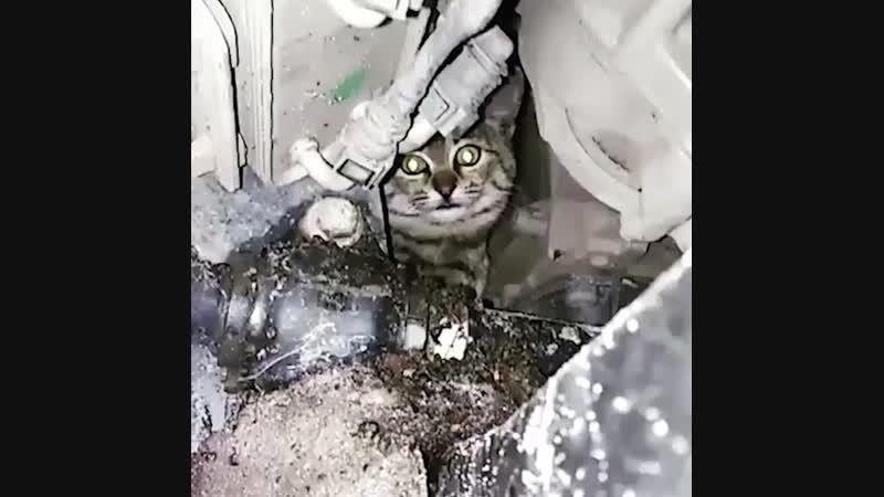 Кот приехал в автосервис | АКУЛА