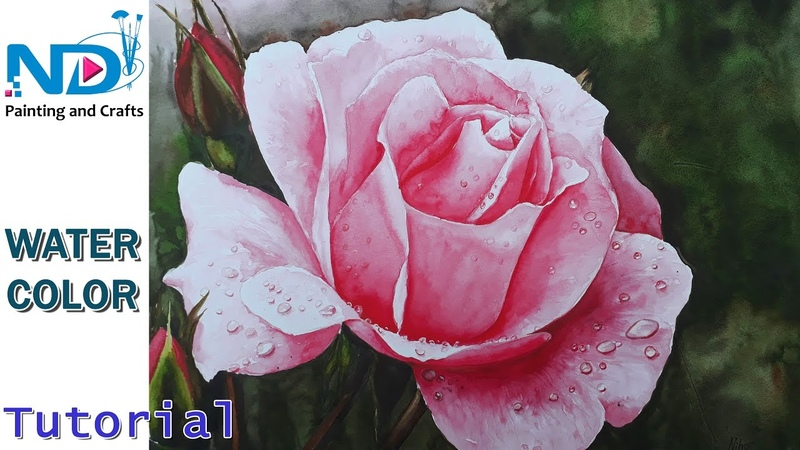 How to paint a rose in watercolor with water drops full details beginners tutorial by Nihar Debnath