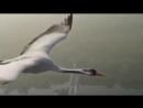 Года как птицы Авторская песня от Сергей Кирстен.mp4