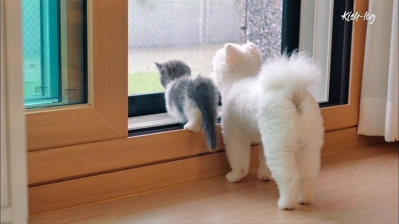 Vlog 먼치킨 새끼고양이 소설이 육묘일기 5 feat 광장시장 넷플릭스 칼국수