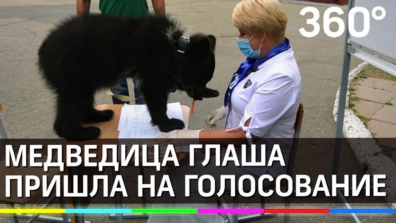 Медвежонок пришел на голосование и даже взял ручку