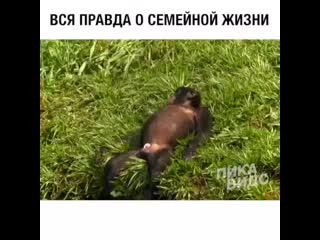 Вся правда о семейной жизни!))
