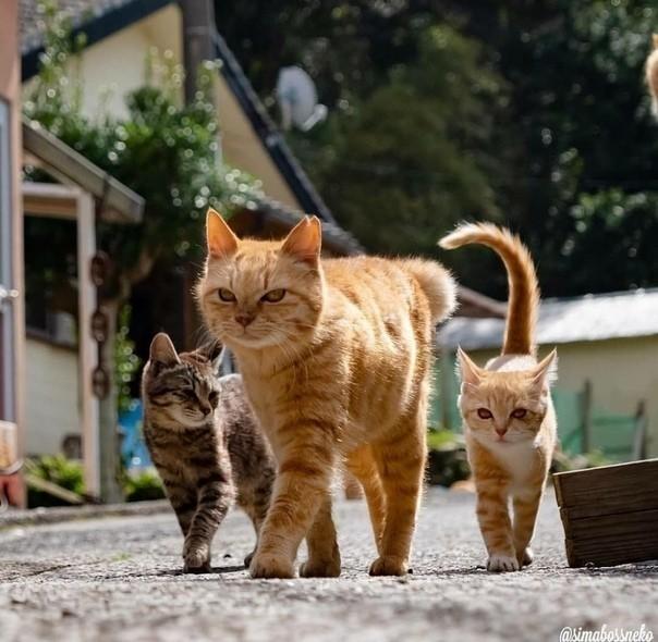 Ребята с нашего двора...