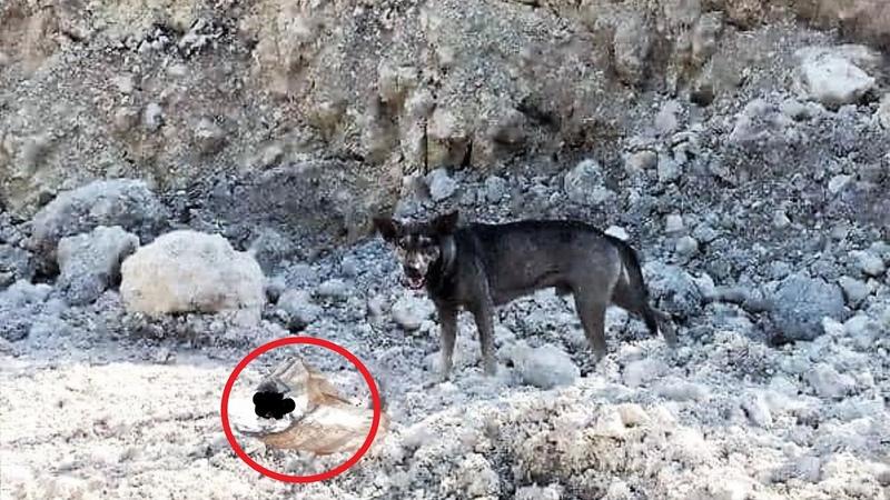 Байкер нашёл в горах лающего пса рядом с сумкой! Заглянув внутрь он потерял дар речи от находки!