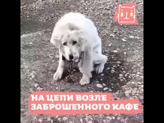 Собаку Афину и ее ребенка приговорили к голодной смерти