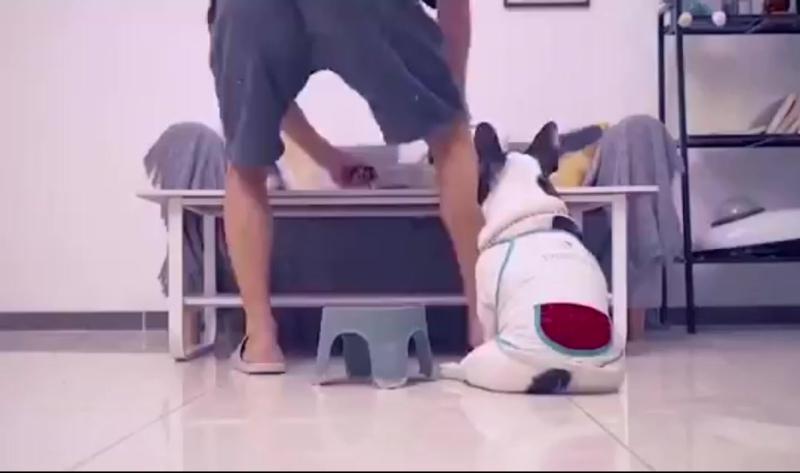 Собака-друг человека)))