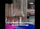 Кузбасские учёные предлагают инновационные методы борьбы с атеросклерозом