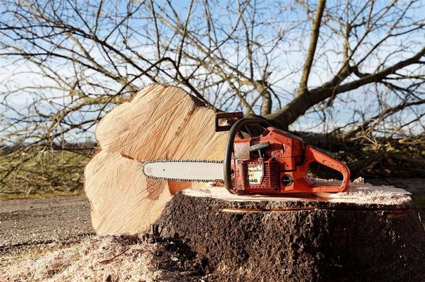 В Самарской области мужчину убило упавшим деревомСледоват...