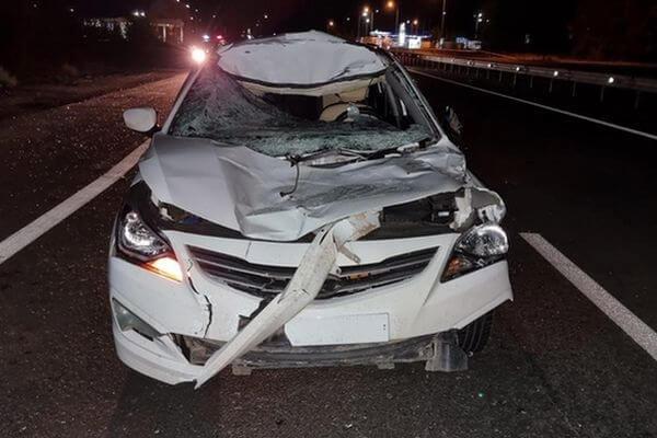 Иномарка сбила лося на трассе М‑5 в Самарской обла...