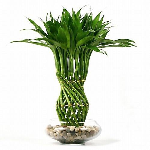 ТОП-10 комнатных растений, которые должны быть в каждом доме