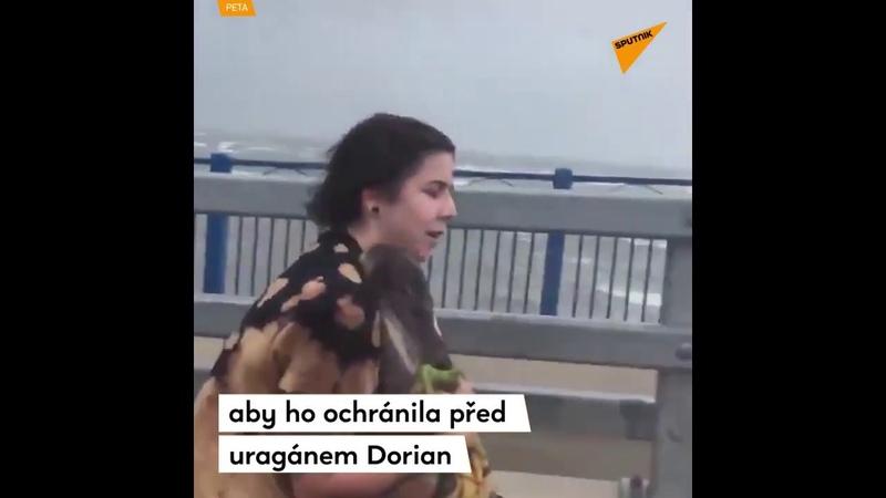 Žena se během uragánu Dorian pustila na mostě do záchrany pelikánů. Jak to skončilo?