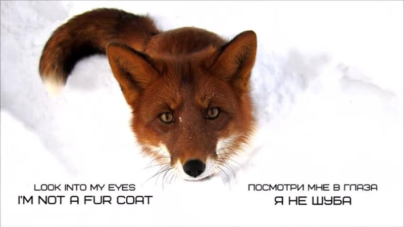 Vasilisa the Fox is against fur farming I'm not a fur coat