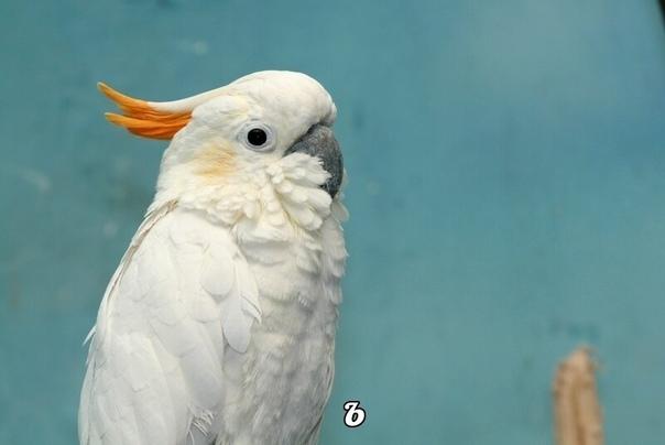 один человек купил попугая, потому что был очень болтлив и хотел научить других болтливости этот человек говорил птице: «пассатижи, пассатижи» (не спрашивайте, зачем он хотел научить попугая