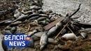 Власти разрешили ловлю радиоактивной рыбы