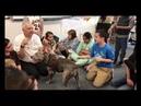 Молли Питбуль Терапевтическая Собака в Начальной школе