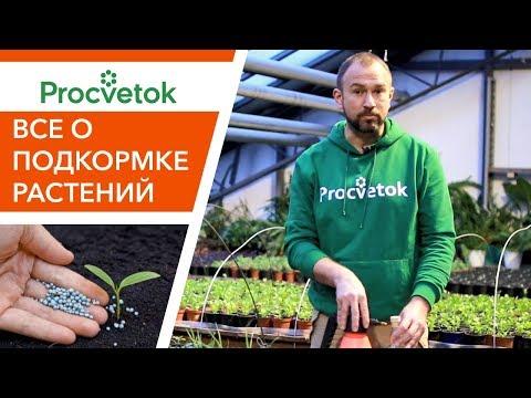 Для хорошего роста и вкусных плодов! Все о правильной подкормке растений