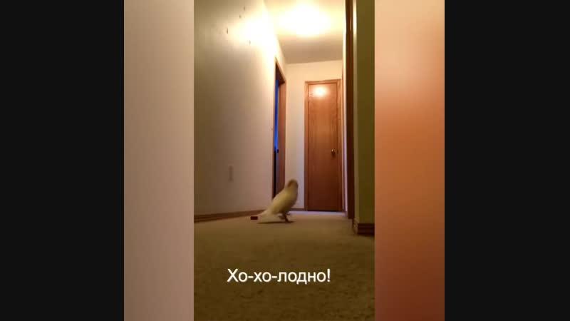 Попугай возмущается НАТАША ЗАКРОЙ ОКНО