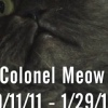 Colonel Meow Полковник Мяу