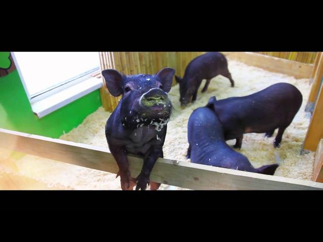 Трейлер к фильму Один день из жизни контактных зоопарков Зверюшки как игрушки