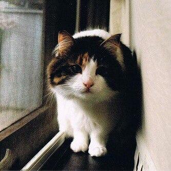 Учитecь у котиков отдыхать по-настоящему...