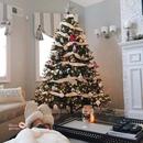 Я хочу новый год…Всю эту суету, снег, мандаринки и запах елки. Хочу новый год, хочу чудес