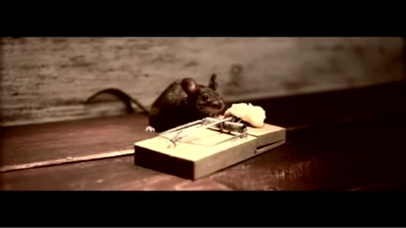 Сыр Cheddar - Реклама - Мышь в мышеловке - прикол ( Ночь пожирателей рекламы )