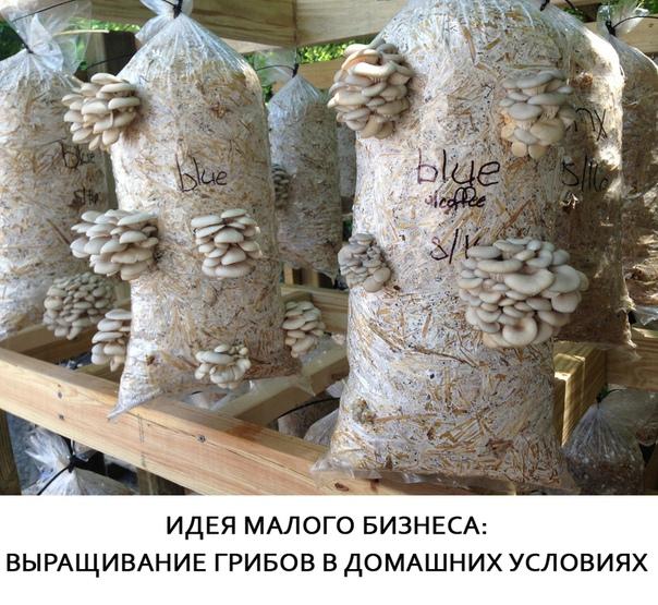 Идея малого бизнеса: выращивание грибов в домашних условиях /практическое руководство с расчётами/На сегодняшний день редко кому известен бизнес на выращивании грибов. И редко кто знает, что