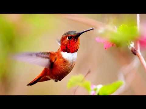 Две непохожие птицы - рассказ про колибри и страусов МСЦ ЕХБ скачан с сайта dstudio.info