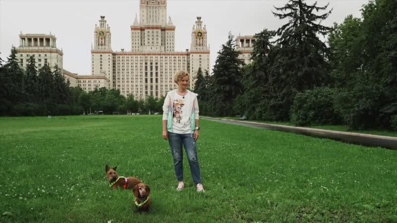 Курс дрессировки собак «Лучший пес Challenge» | Урок первый