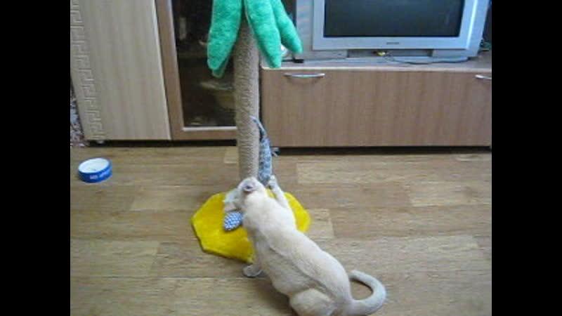 Развлечение прокати мыша на карусели